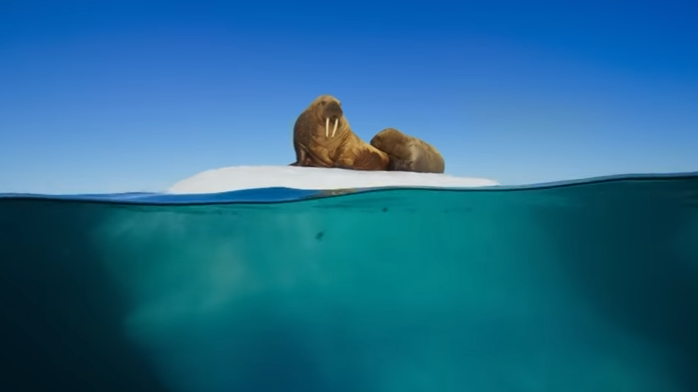 'Blue Planet' Shows Nature Is Supreme By Beating 'X Factor' And 'Strictly' In Ratings