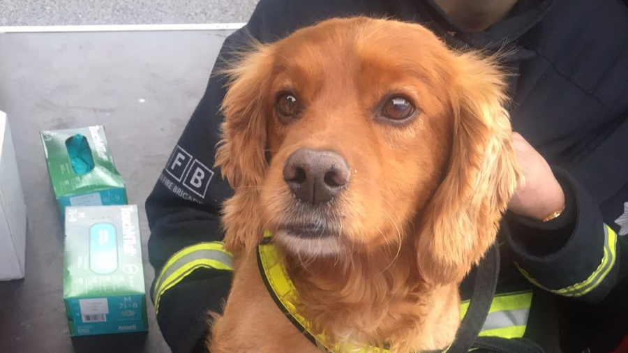 Incredible Dogs Are Helping Out At The Site Of The Grenfell Tower Fire
