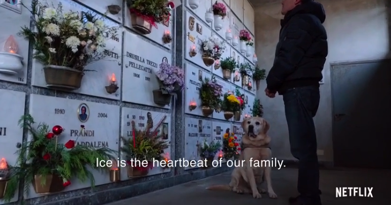 Netflix's New Documentary Series About Dogs Is Gonna Make You Cry
