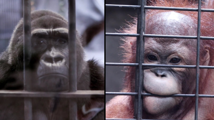 'World's Saddest Zoo' On Highest Floor Of Shopping Centre Causes Public Outrage