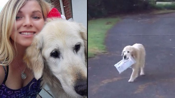 Owner Shares Video Of Loyal Dog Bringing Them The Newspaper