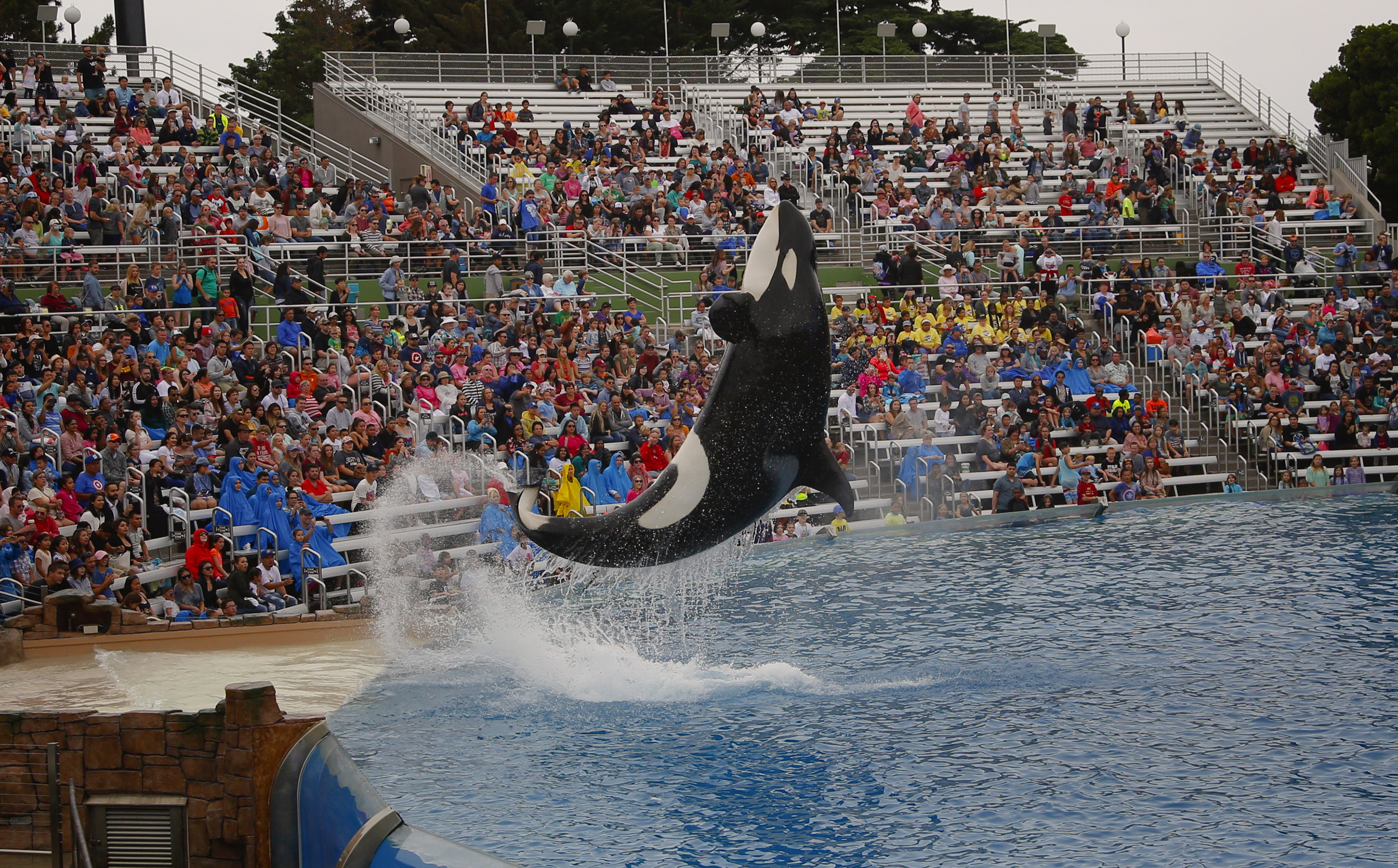 30-year-old orca dies at SeaWorld