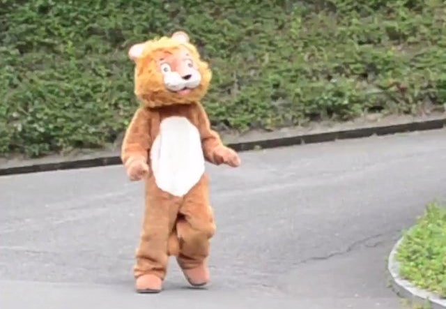 Japanese staff chase fake lion in viral video