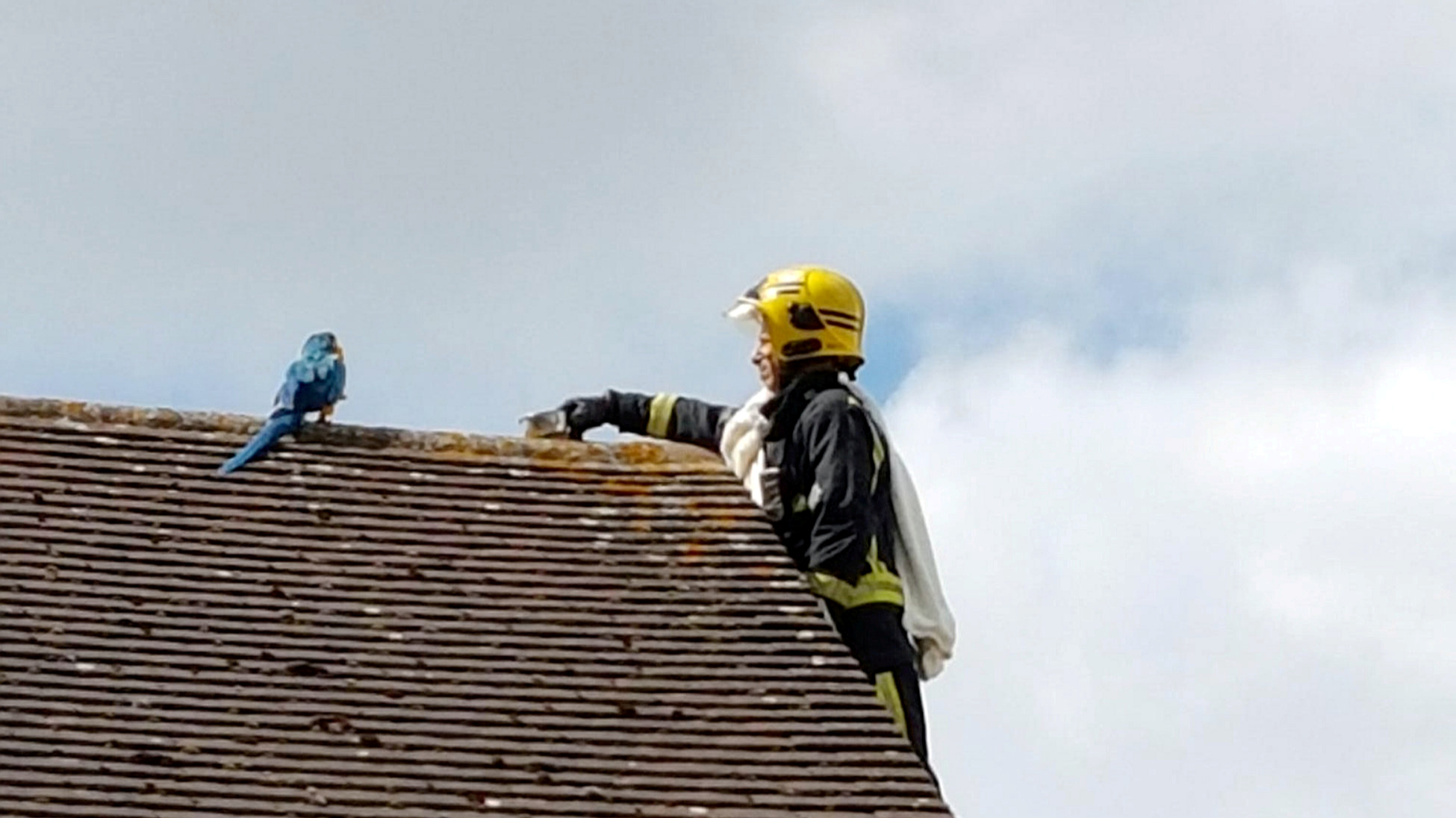 Parrot Trapped On Roof Keeps Telling Fire Crew To Quot F K