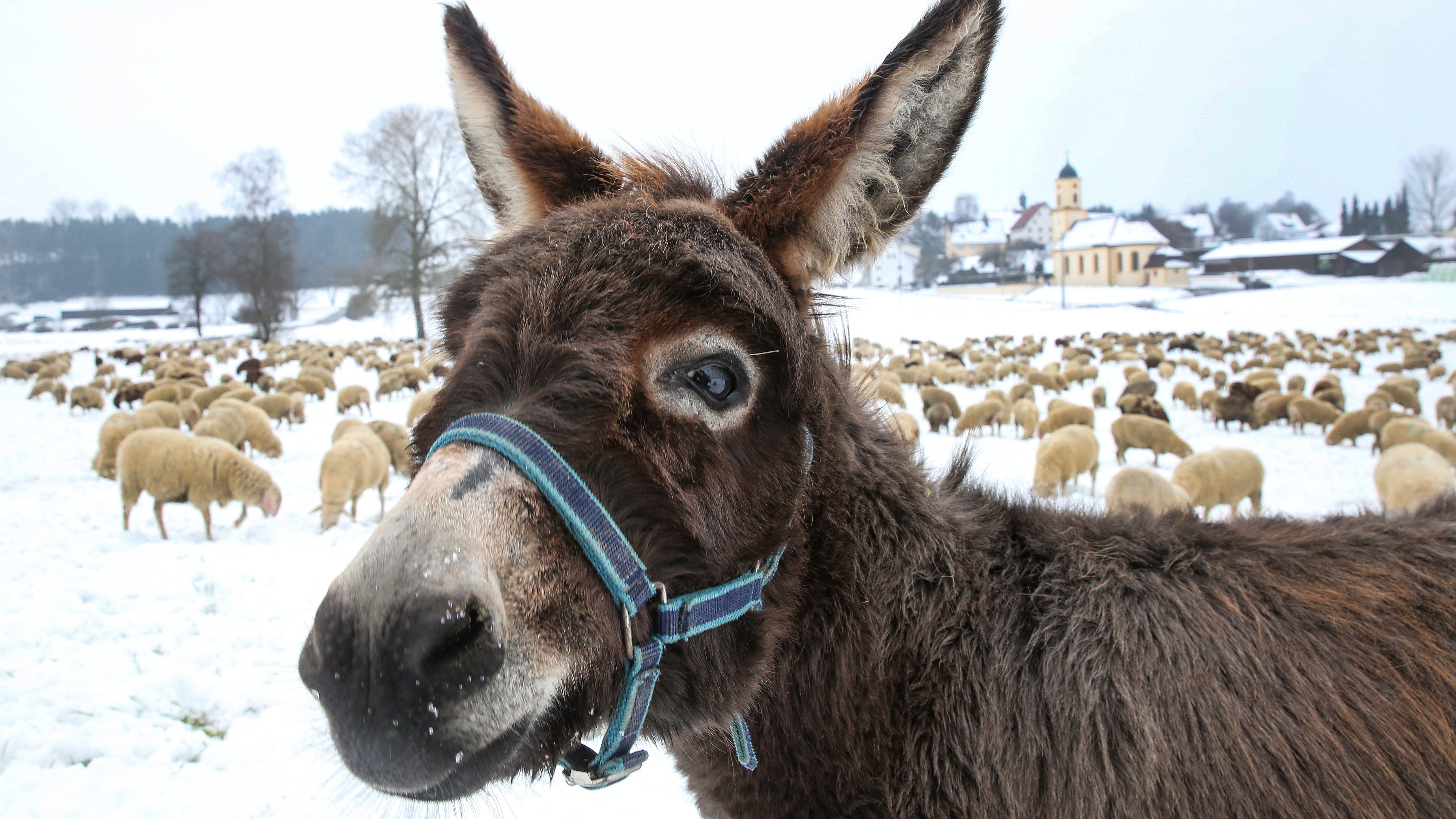 Donkey Nannies Are The Most Incredible Thing You'll See All Year