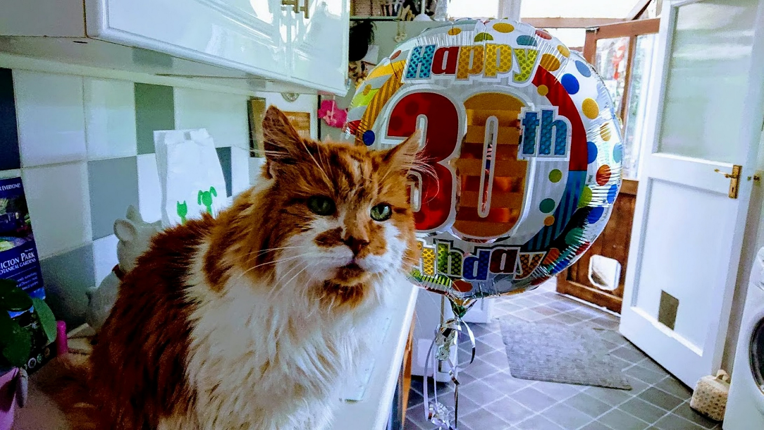 British Cat Could Be 'Oldest In The World' After Celebrating 30th Birthday
