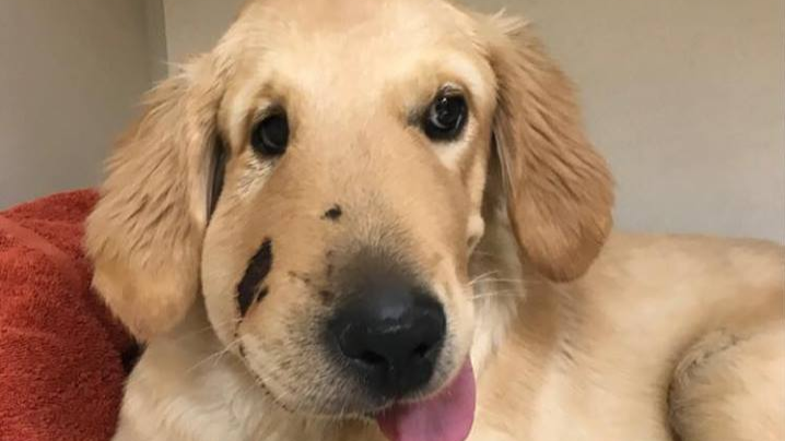 Meet Todd, The Dog That Saved His Owner From Being Bitten By A Rattlesnake