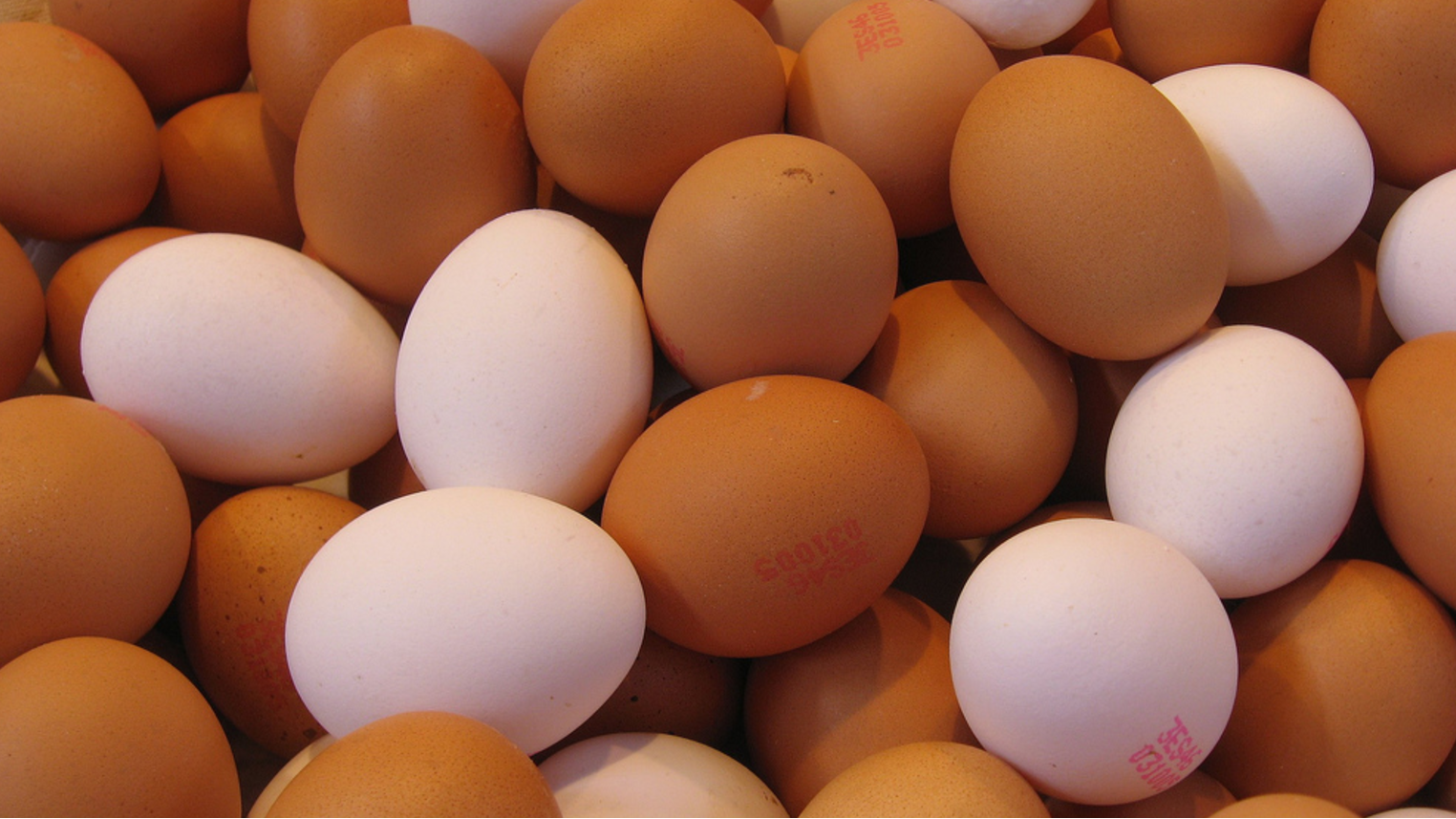 Eggs Contaminated With Fipronil Found In 15 EU Countries And Hong Kong