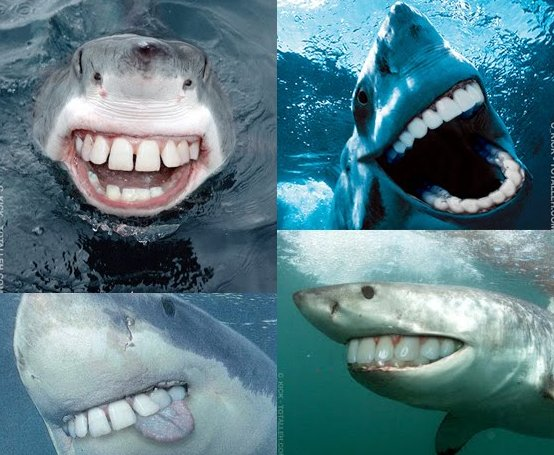 Sharks are so much better with human teeth.