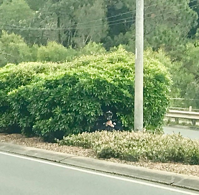 The officer was spotted hiding in a bush. Credit: Facebook/North Lakes Community