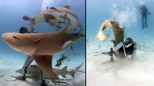 'Shark Whisperer' Lets Himself Get Bitten By Sharks