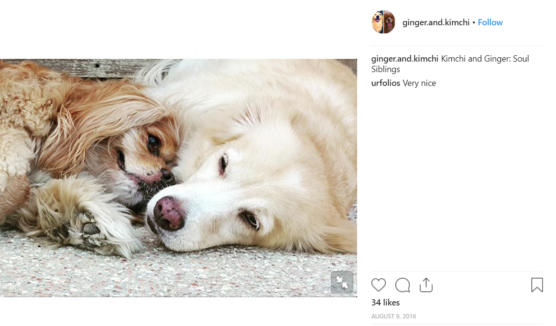 Credit: Instagram/ginger.and.kimchi