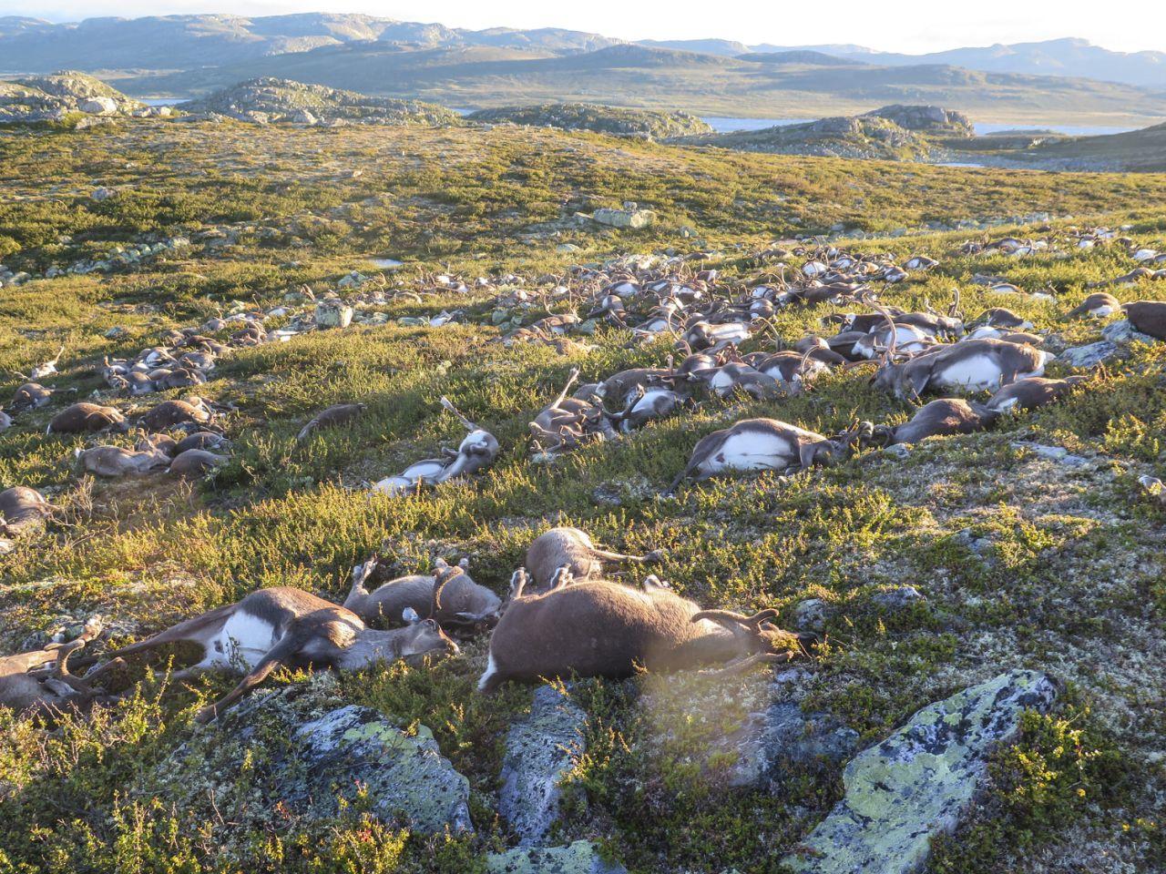 Credit: Norwegian Environment Agency