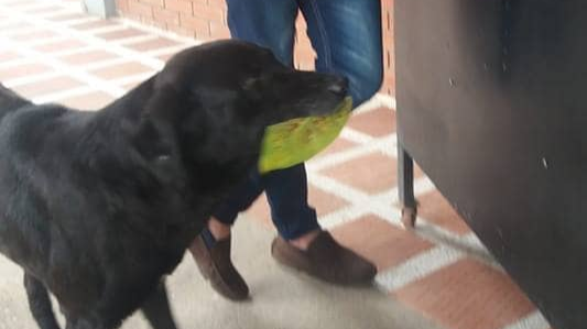 This Dog Has Learned How To Buy Himself Treats From A Local Shop