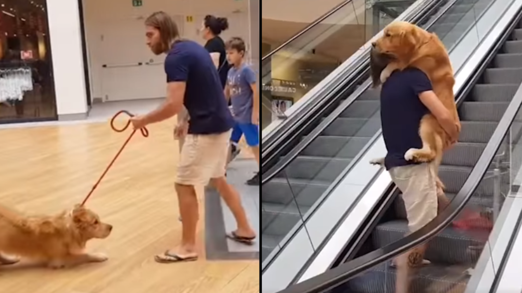 Man Carries His Dog Up Escalator After It Gets Scared
