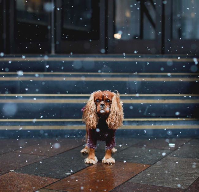 Meet Your Favourite Dog Influencers At A London Meet-Up For Insta-Famous Pups