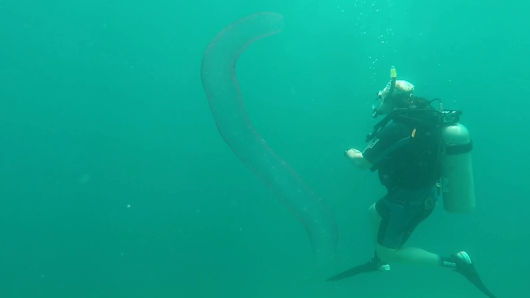 Divers Baffled When They Come Across 'Alien-Like' Sea Creature
