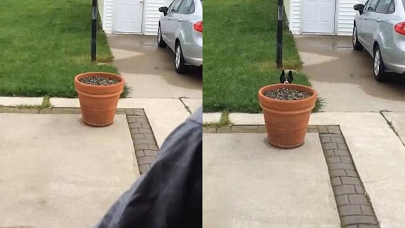 Dog Hides From Owners When Her Name Gets Called