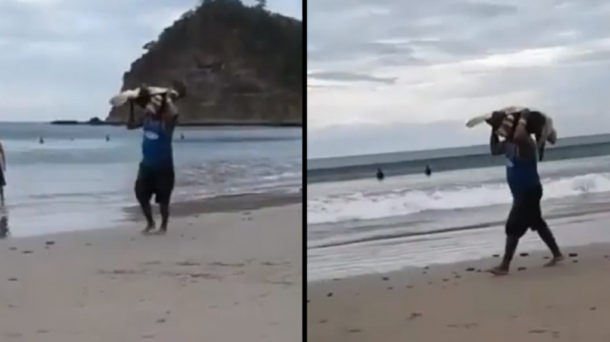 Poachers Steal Helpless Sea Turtles From Protected Beach