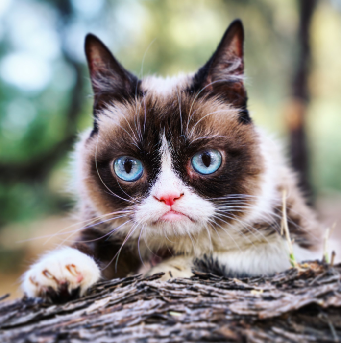 Internet sensation Grumpy Cat has died at age 7