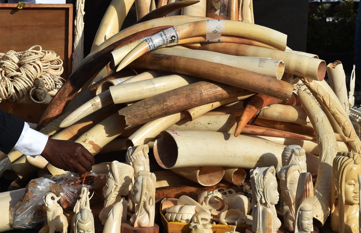 Hundreds of kilograms of seized ivory. Credit: PA