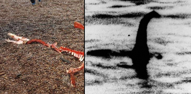 People Thought The Loch Ness Monster Was Found Dead But All Is Not