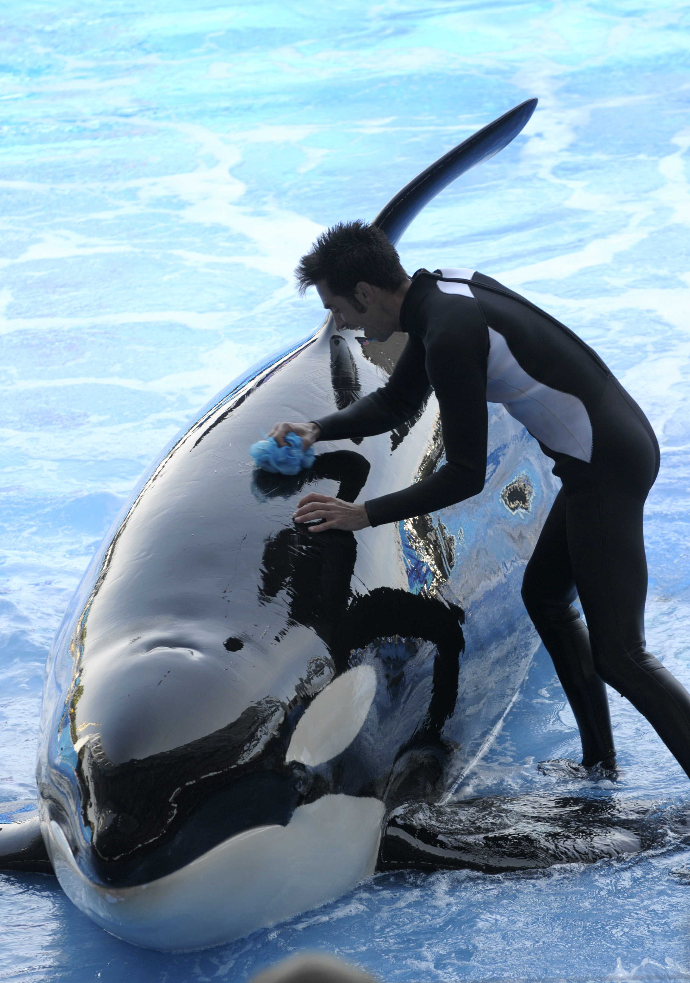 A killer whale died at SeaWorld Orlando in January. Credit: PA