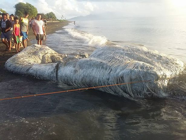 Huge 'globster' sea creature on Philippines beach baffles experts