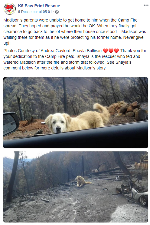 The post has gone viral. Credit: Facebook/K9 Paw Print Rescue