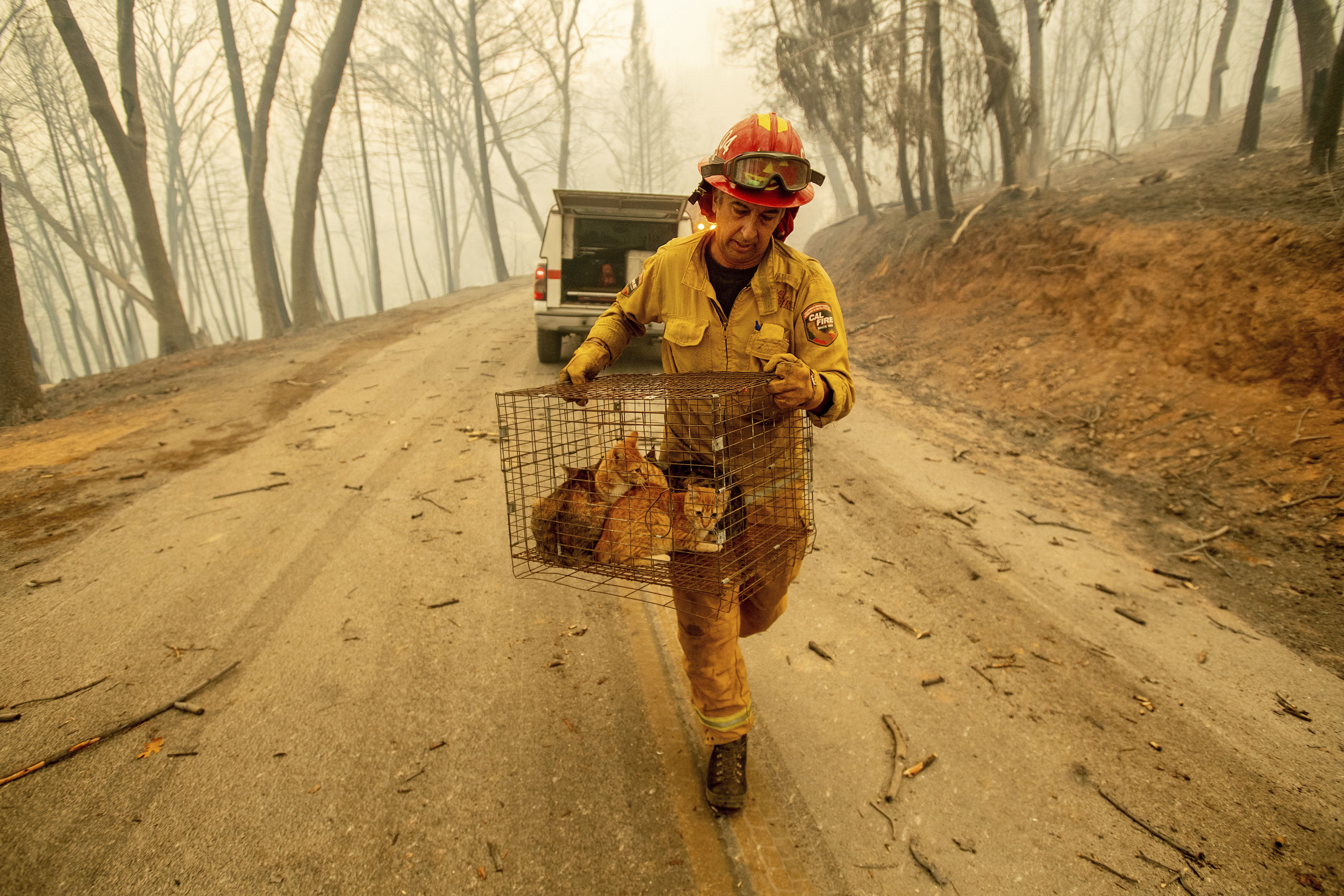 Capt. Steve Millosovich carries a cage of cats while battling the Camp Fire in Big Bend. Credit: PA