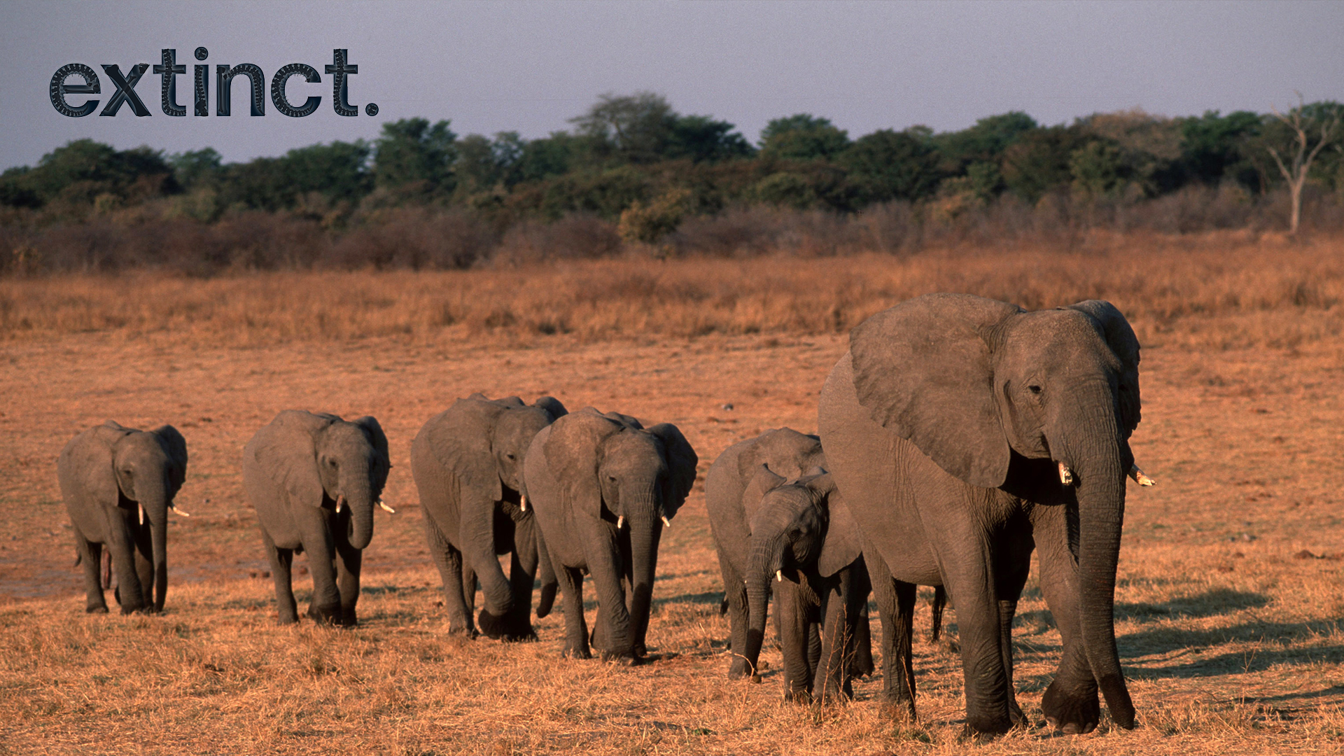 China Has Completely Banned Its Legal Ivory Trade