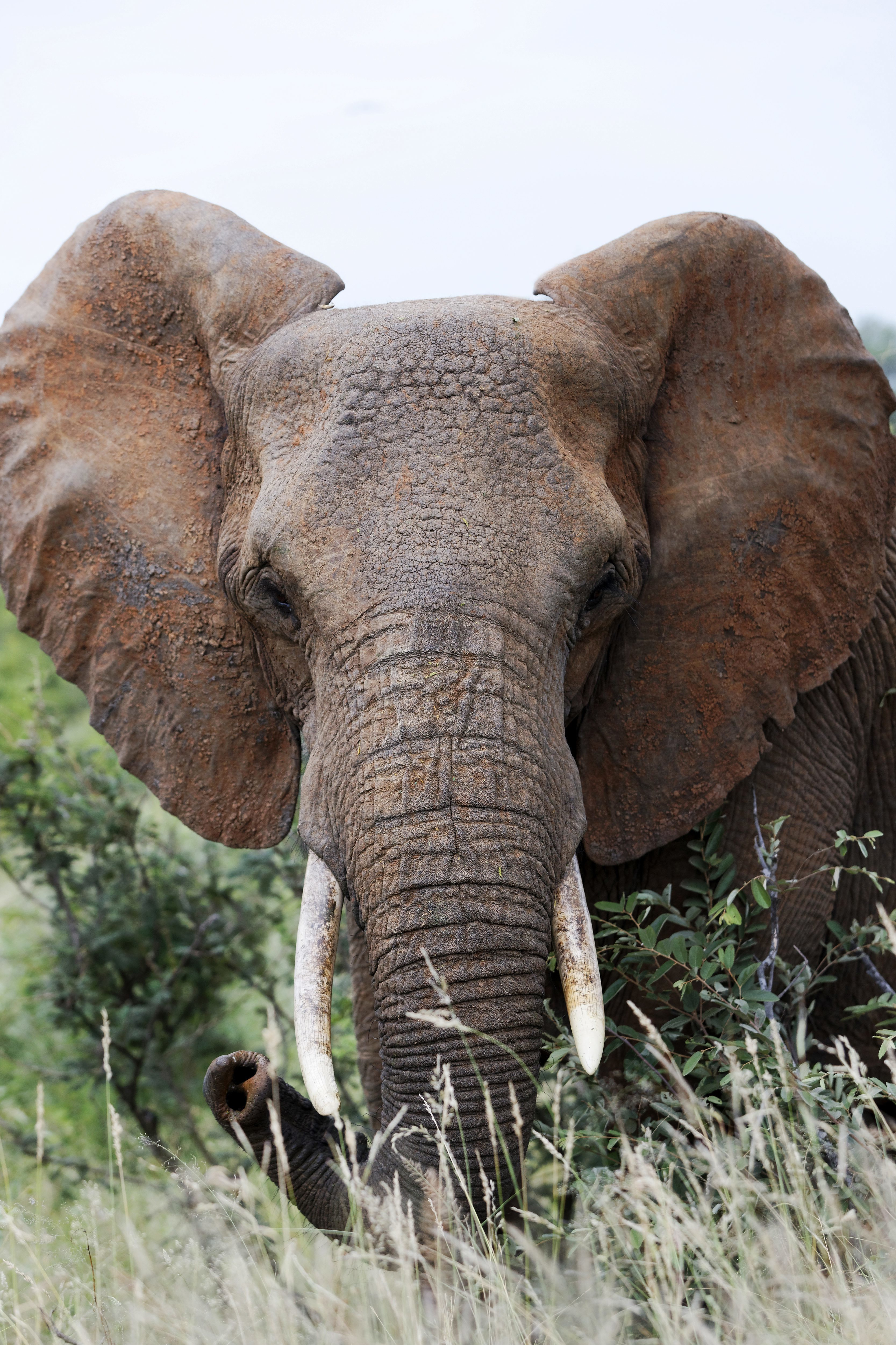 An elephant in South Africa. Credit: PA