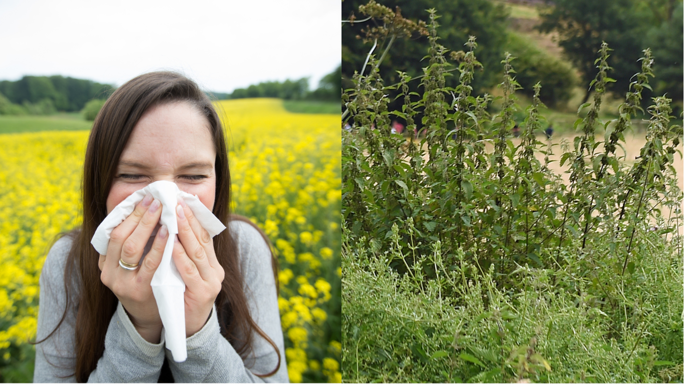 ​Bloke Reckons He's Cured His Hay Fever With Stinging Nettles