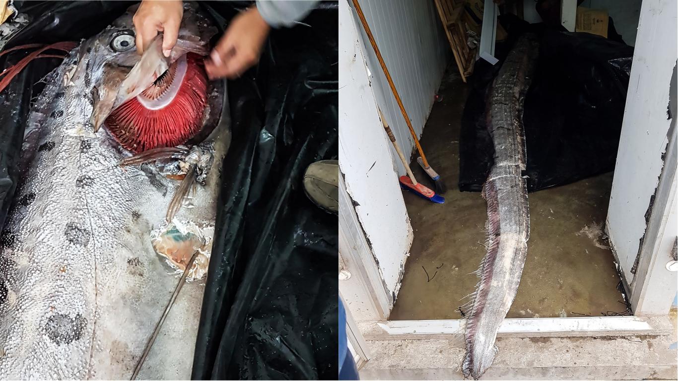Fishermen Baffled By Bizarre Five-Metre Sea Creature