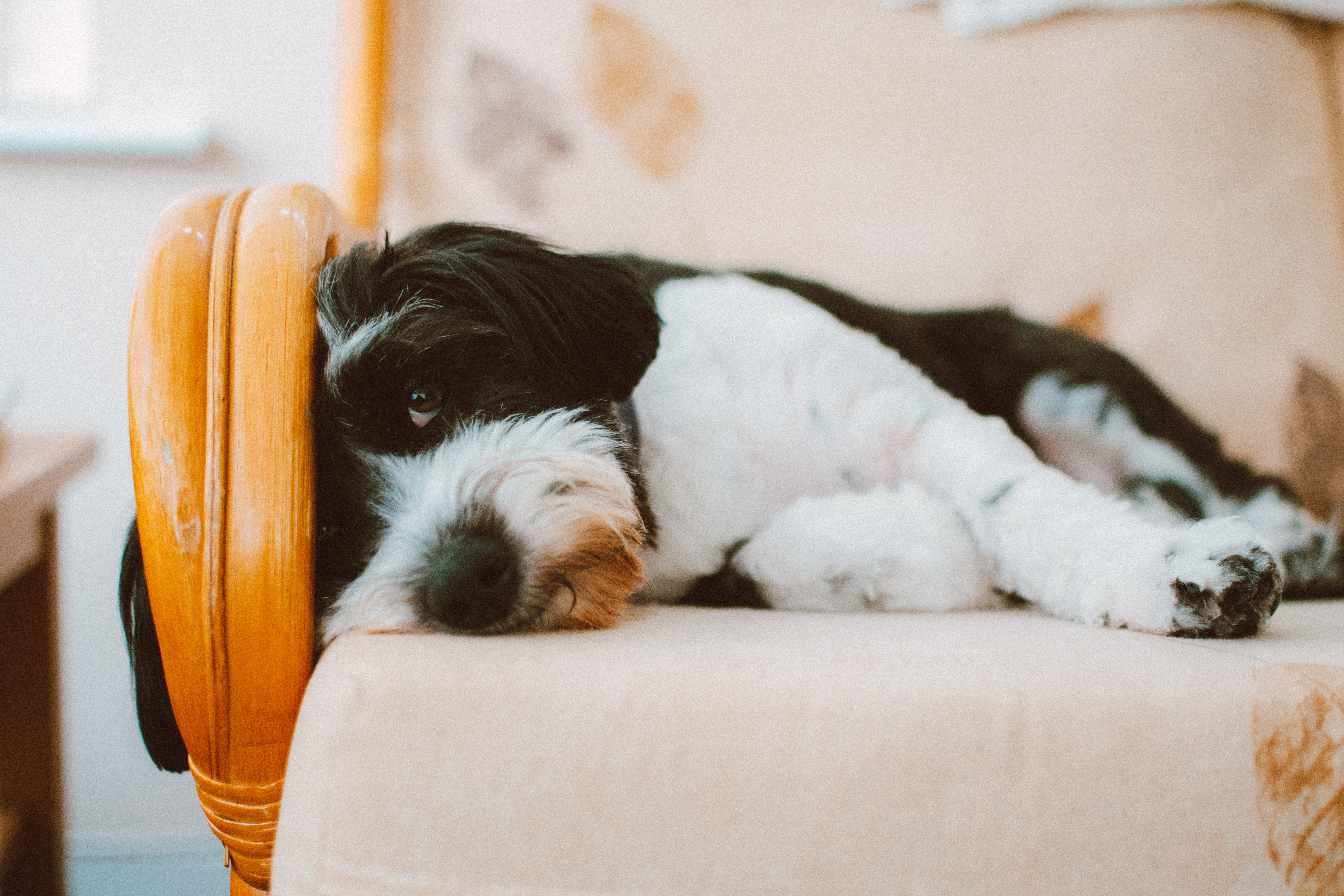 Keeping on top of your pet's hygiene can help prevent the virus. (Credit: Pexels)
