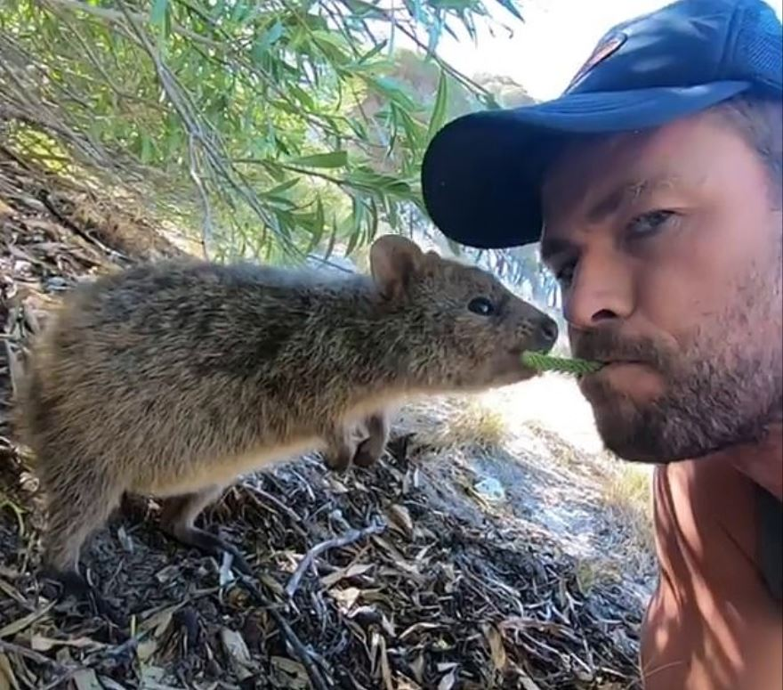 Just look at it (the quokka). Credit: Instagram/chrishemsworth