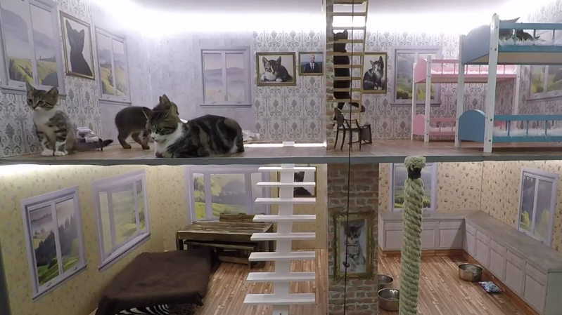 'Keeping Up With The Kattarshians' Is A 24 Hour Reality TV Show About Kittens