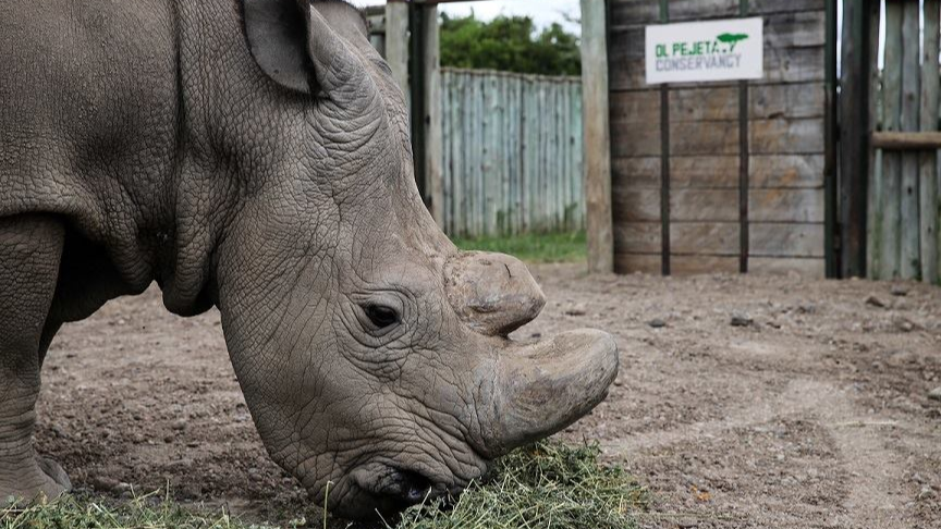 ​Wildlife Poachers In Kenya To Reportedly Face Death Penalty