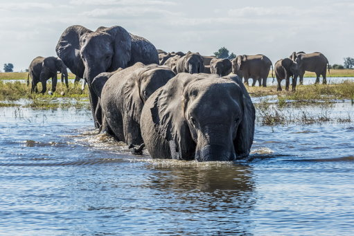 The hunting ban in Botswana has been lifted. Credit: PA
