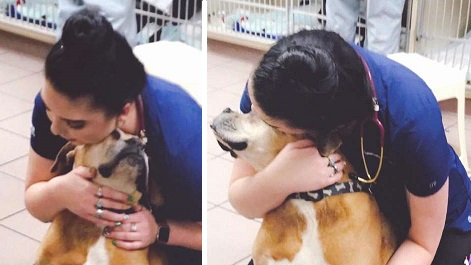 Dog Goes To The Vets And Thinks She Is Just There For Hugs