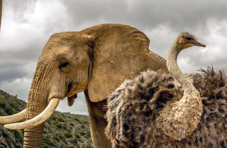 The nine-year-old has been taken in by a family of elephants at the reserve in South Africa. Credit: Caters