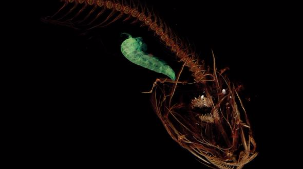 The Deepest-Dwelling Fish Has Been Found Near The Bottom Of The Mariana Trench