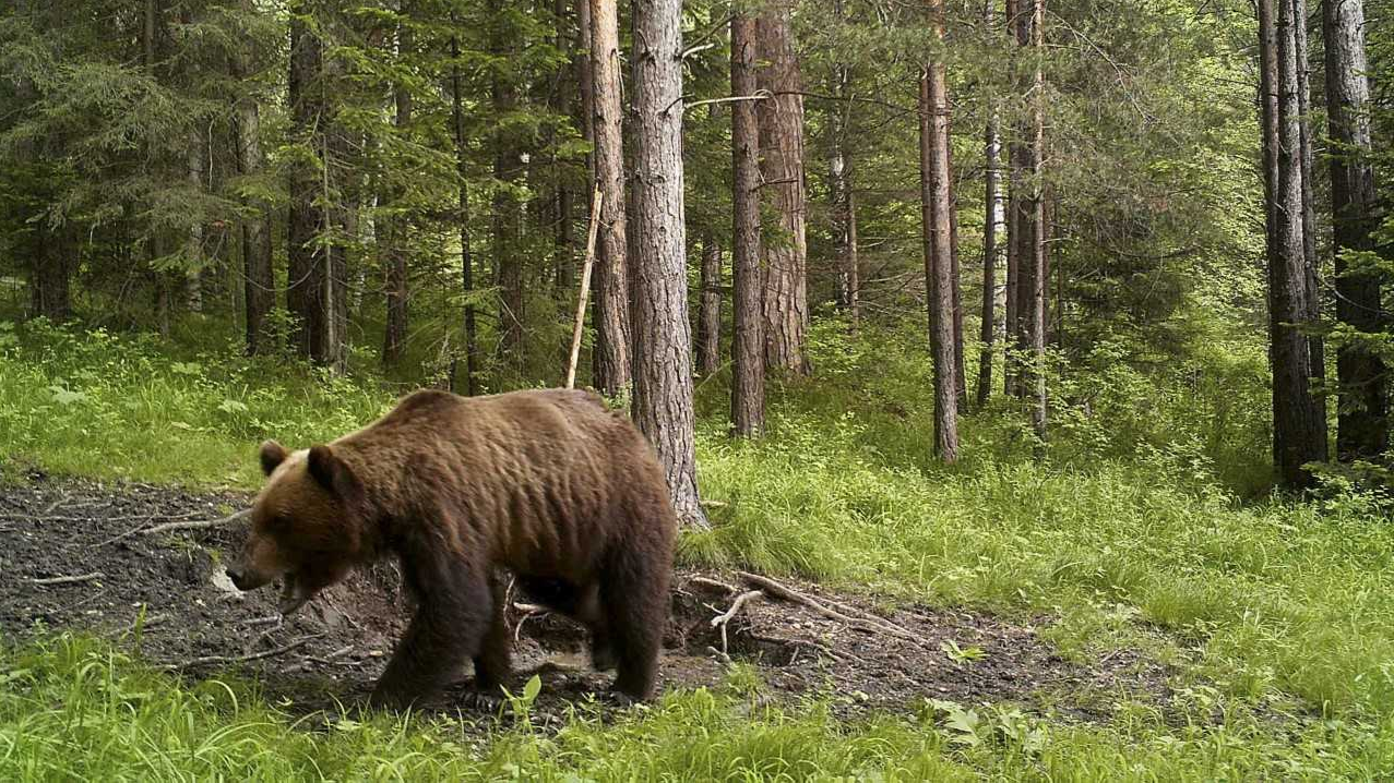 Viral Story Of Man Being Trapped In Cave By Bear In Russia Is Fake