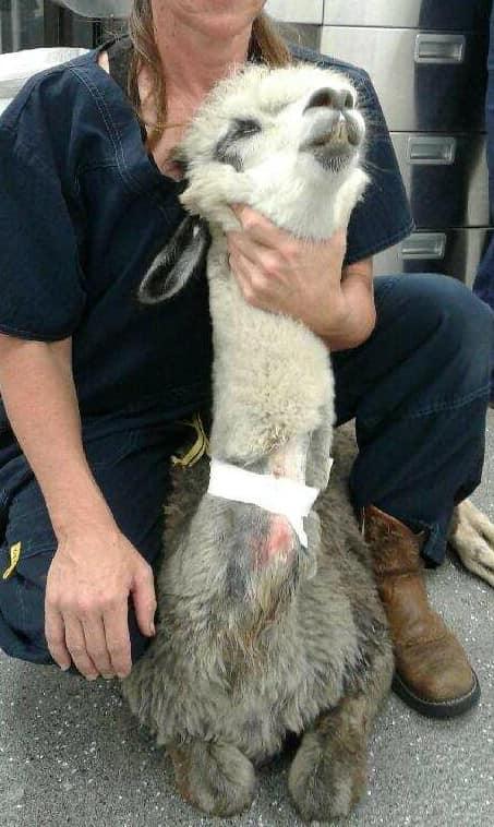 Credit: Facebook/Creekside Animal Hospital, Fleming Island, FL