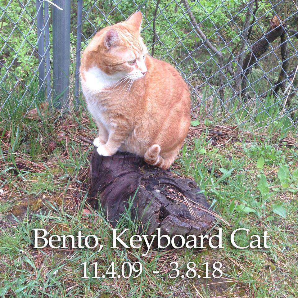 Bento, the Keyboard Cat has died