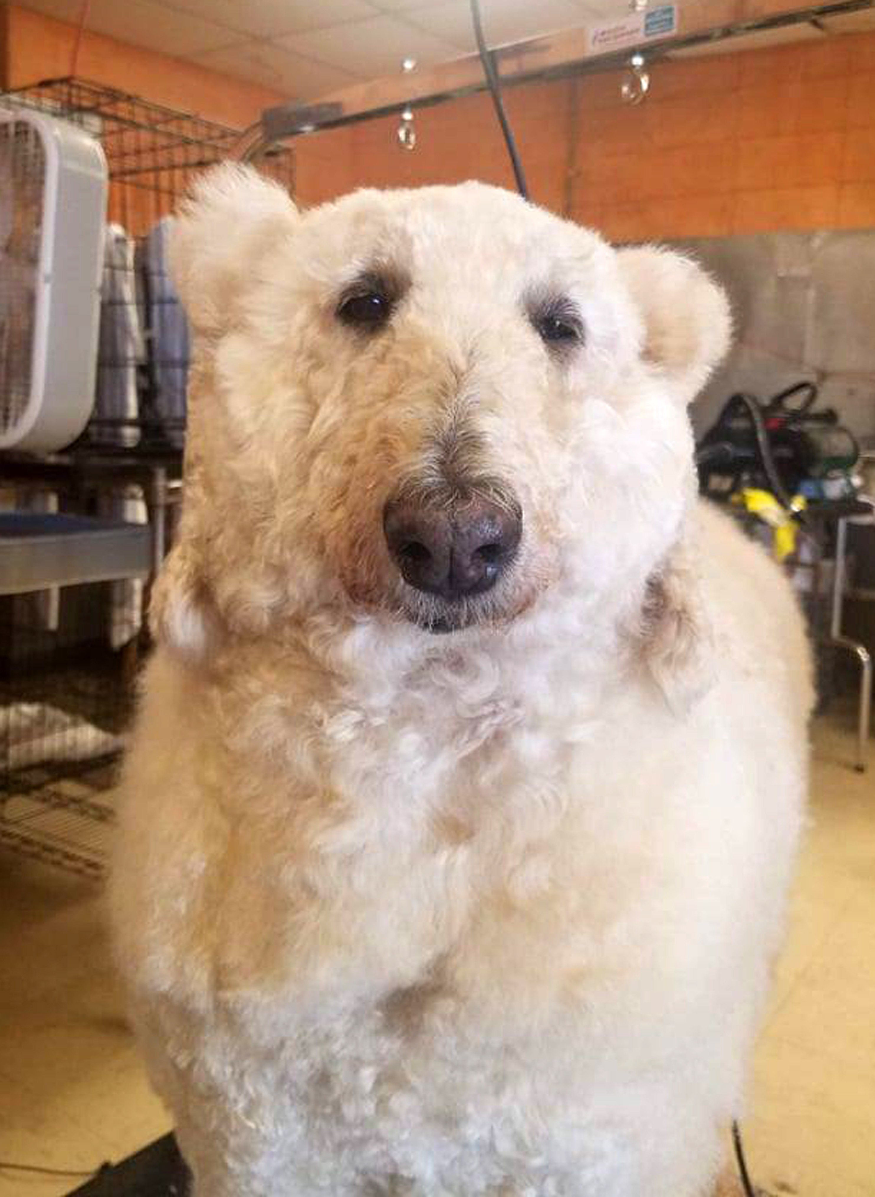 Is it a dog? Is it a polar bear? Credit: Caters