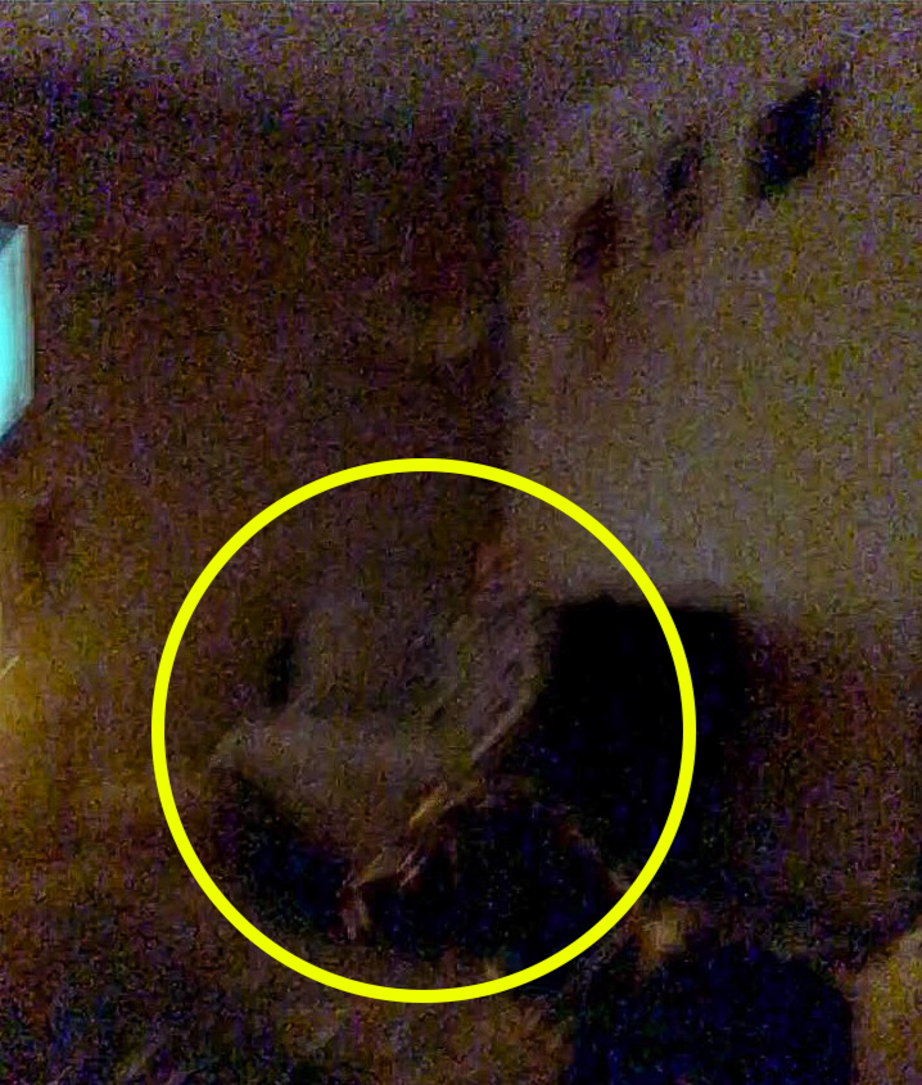 Woman Thinks She s Caught Ghost Previous Tenant Camera