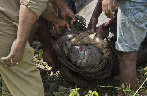 Kaziranga National Park Shoots Poachers To Protect Rhinos