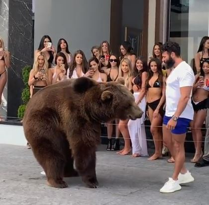 The bear landed back on the ground and it looked like Bilzerian panicked a tad. Credit: Instagram/danbilzerian