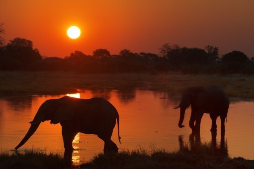 Sunset with two elephants crossing a flooded area near the camp Khwai River Lodge by Orient Express in Botswana. Credit: PA